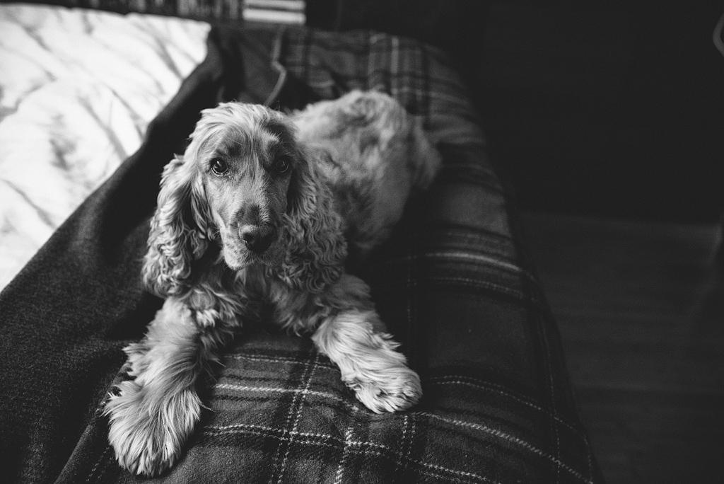 Dog sitting on edge of bed